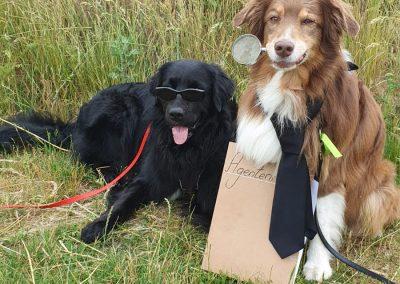 Dogs in Black
